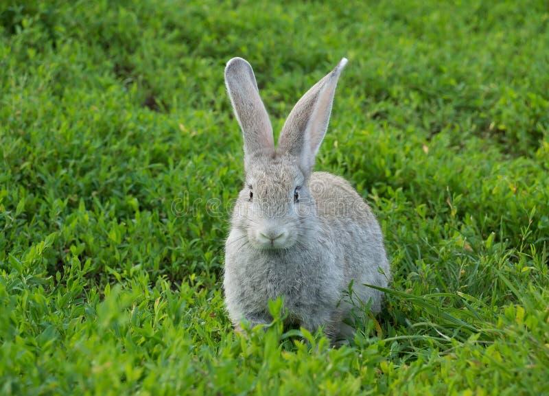 Kaninchen, das auf dem Gras sitzt stockfotos