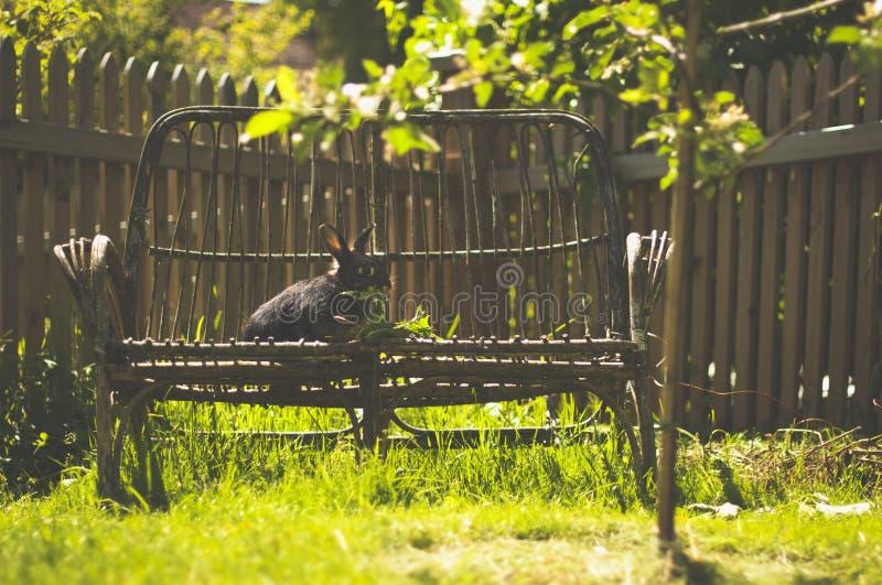 Kaninchen, das auf einer Bank sitzt stockbild
