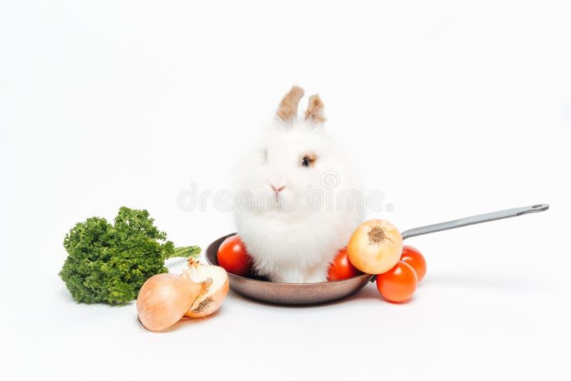 Kaninchen, das in der Bratpfanne sitzt lizenzfreies stockfoto