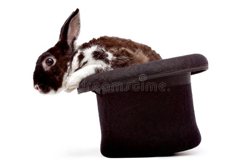 Kaninchen, das in einem schwarzen Hut sitzt stockfotografie