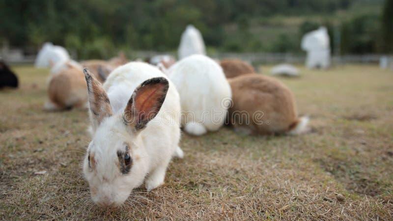 Kaninchen, das etwas Nahrungsmittel, Unschärfehintergrund isst, Fokus auf Gesicht, stockfotos