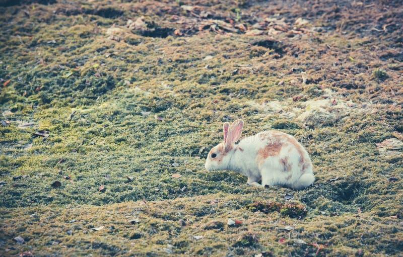 Kaninchen, das nach Nahrung sucht stockfoto