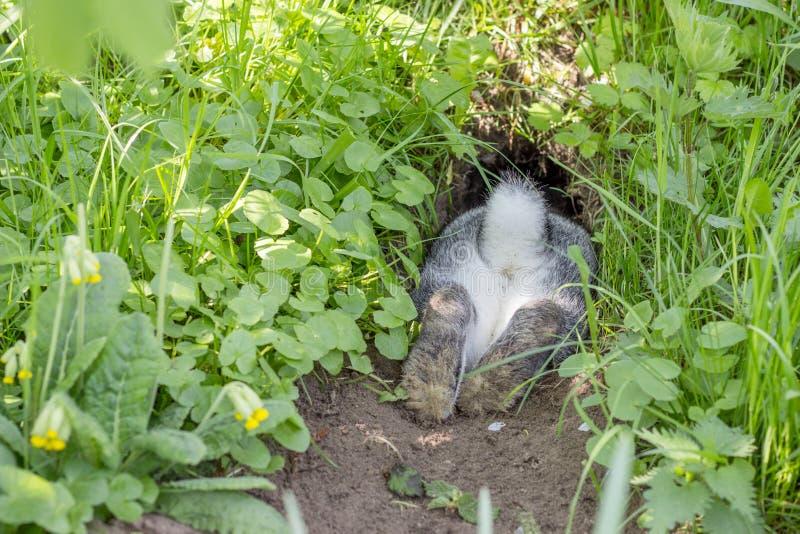 Kaninchen in einem Kaninchenbau lizenzfreie stockfotos