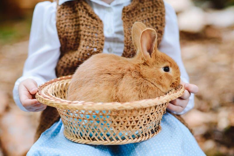 Kaninchen in einem Korb in den Kind-` s Händen stockbilder