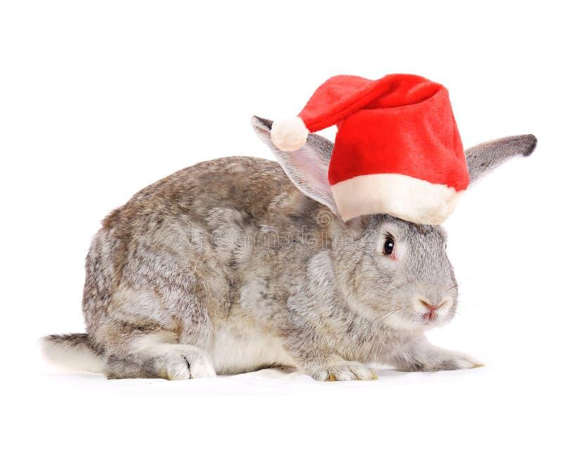 Kaninchen in einem Sankt-Hut. stockfotos