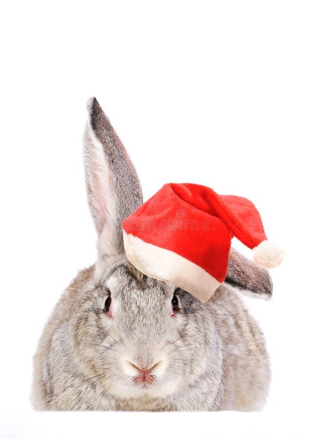 Kaninchen in einem Sankt-Hut. lizenzfreies stockfoto