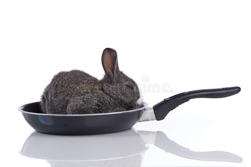 Kaninchen in einer Bratpfanne stockbild