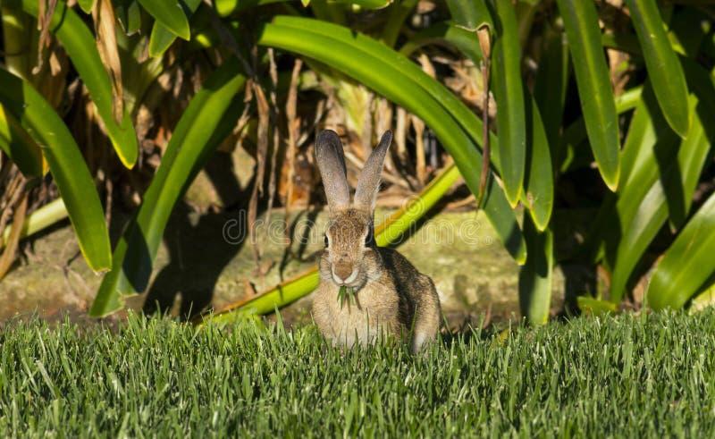 Kaninchen-Essen lizenzfreie stockbilder