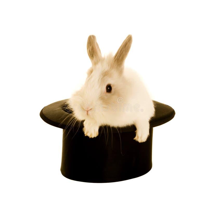 Kaninchen im Hut lizenzfreie stockfotos