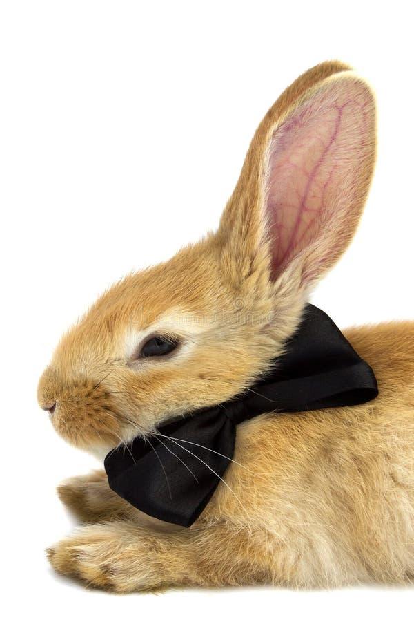 Kaninchen mit einer schwarzen Schmetterlingsnahaufnahme lizenzfreie stockfotografie