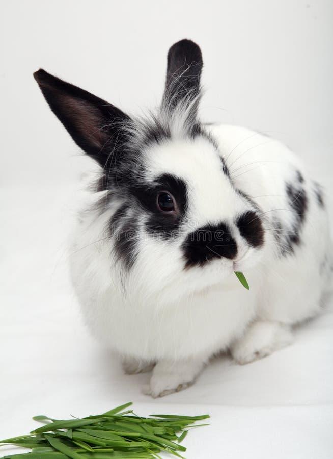 Kaninchen mit Gras lizenzfreies stockbild