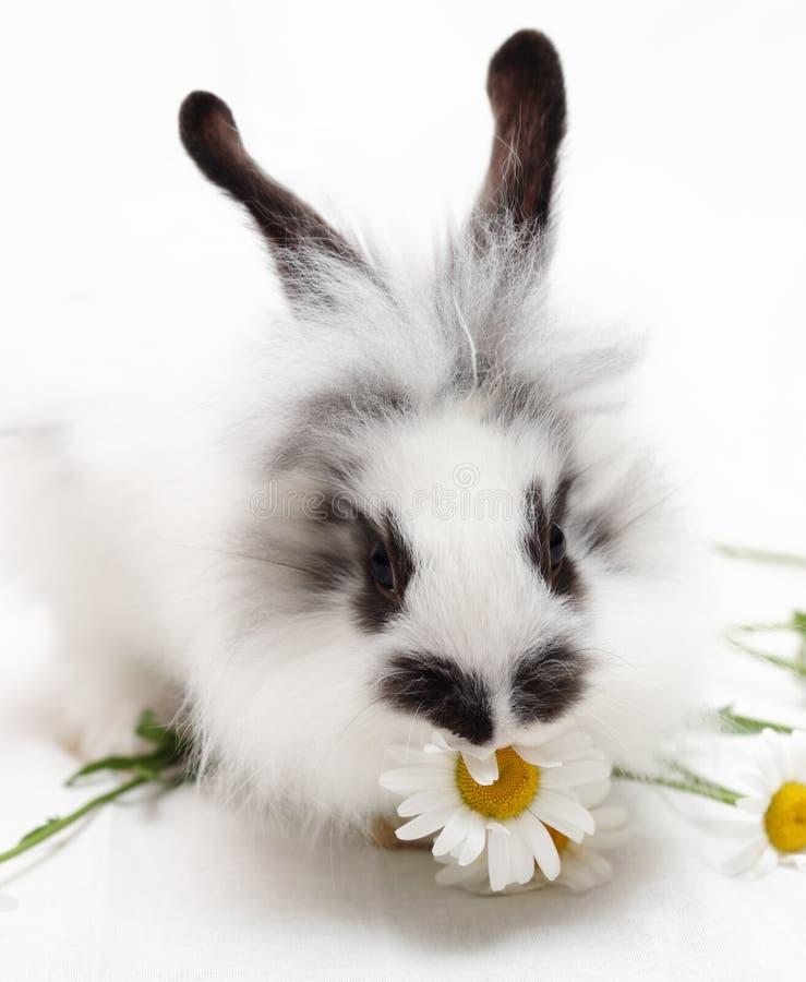 Kaninchen mit Kamille lizenzfreie stockfotos