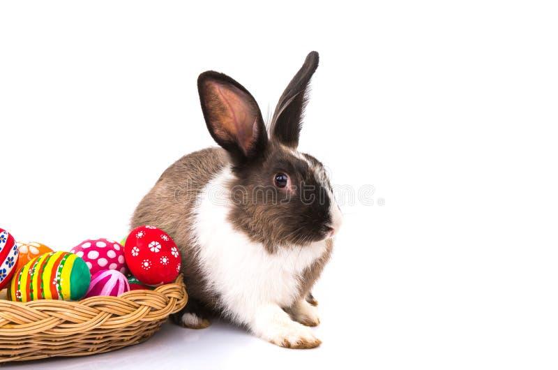Kaninchen mit Ostereiern lokalisiert lizenzfreie stockbilder