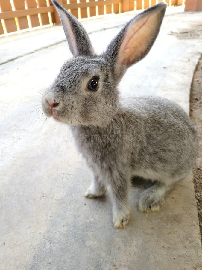 Kaninchen nett stockbild