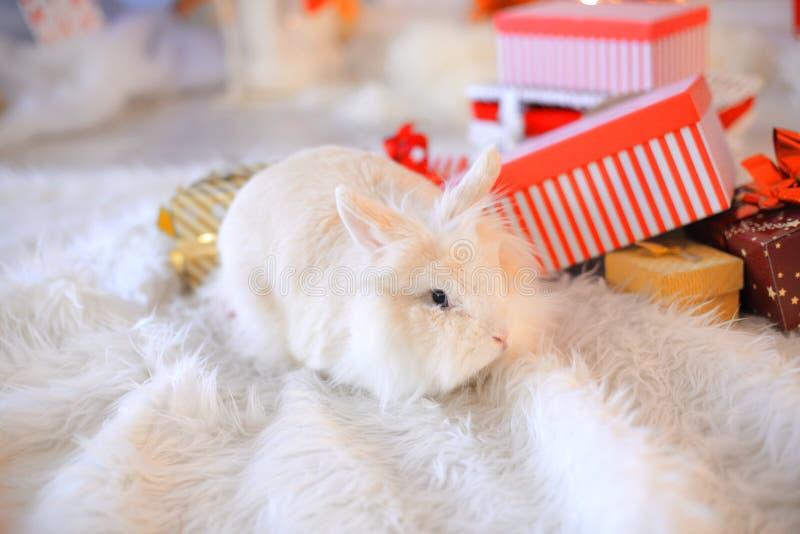 Kaninchen in roten Sankt-Hüten, Feiertags-Weihnachtshintergrund stockfotografie