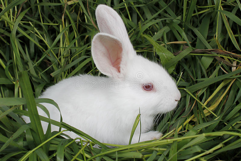 Kaninchen sitzt auf dem gemähten Gras lizenzfreies stockbild