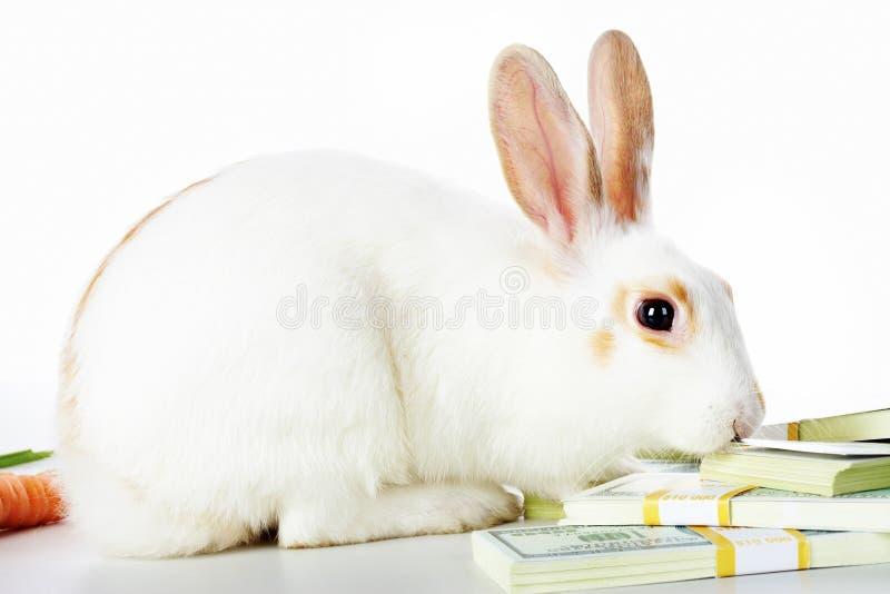 Kaninchen und Dollar lizenzfreies stockfoto