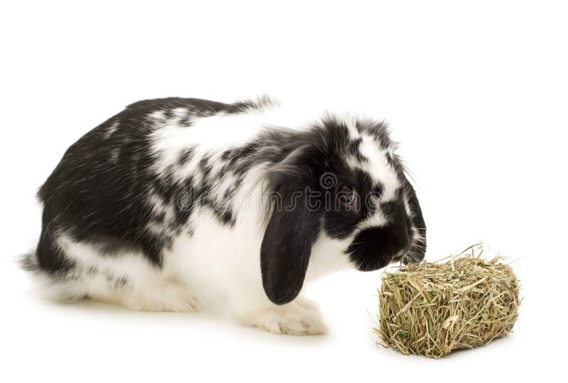 Kaninchen und Heu stockfotografie