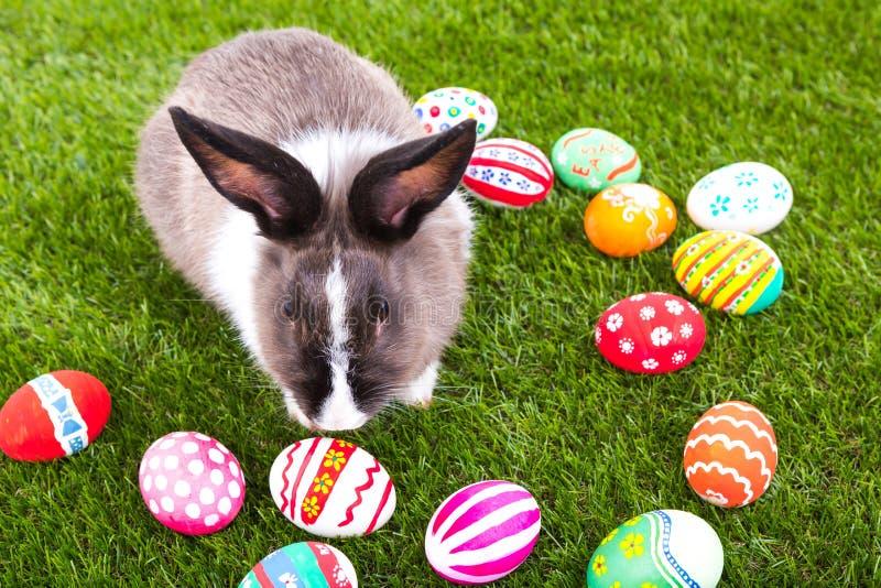 Kaninchen und Ostereier lizenzfreie stockbilder