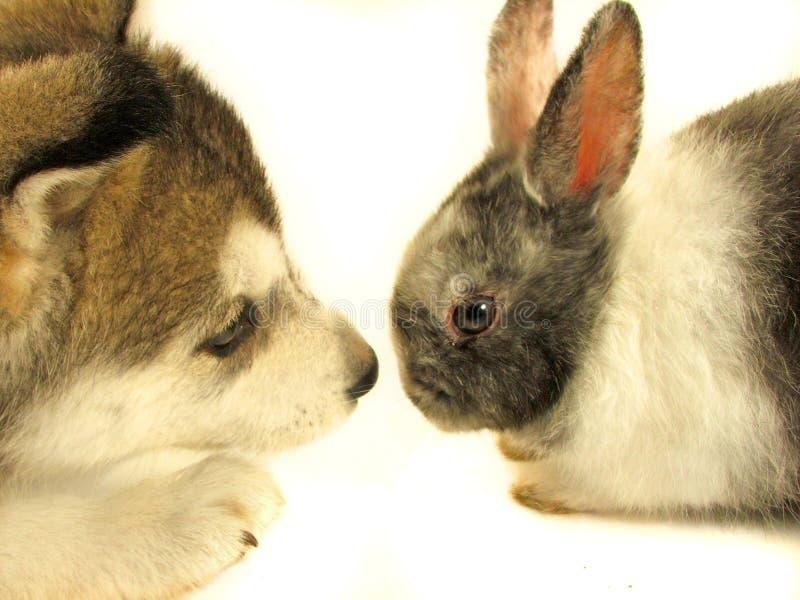Kaninchen und Welpe lizenzfreie stockfotos