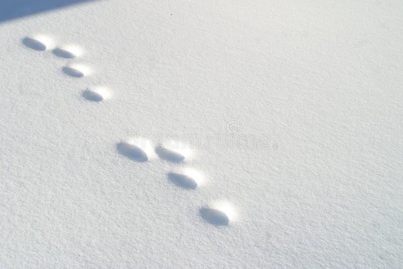 Kaninchenabdrücke Im Schnee Stockfoto