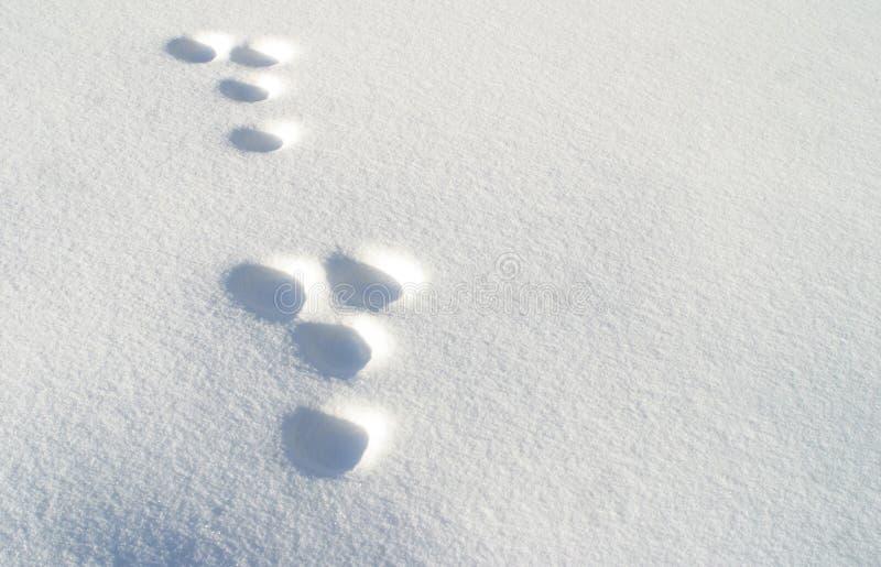 Kaninchenabdrücke im Schnee stockfotos
