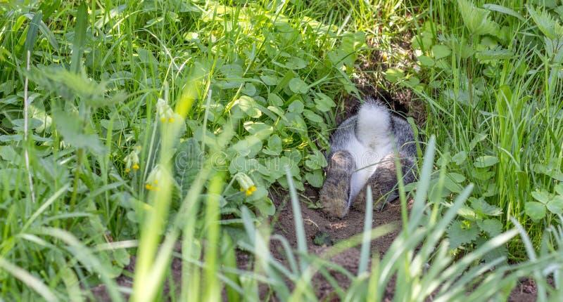 Kaninchenbau stockbild