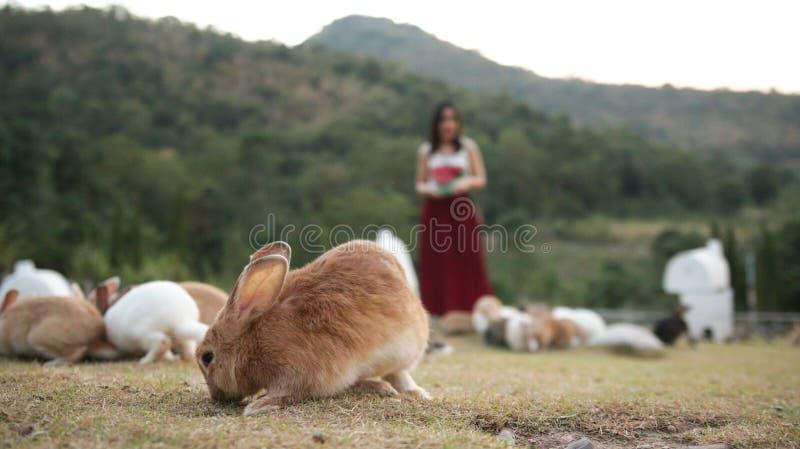 Kaninchengruppe, die, Frauengeschenk sie Nahrungsmittel isst lizenzfreies stockbild