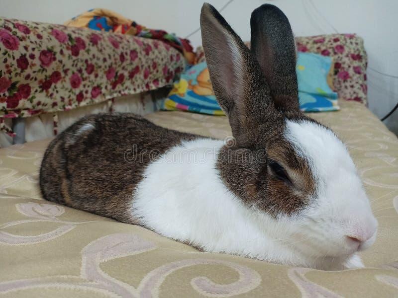 Kaninchenh?schenschlaf auf dem Bett stockfotos