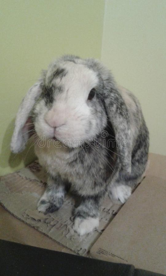 Kaninchenhaltungszeit lizenzfreies stockfoto