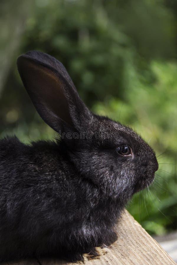 Kaninchenhaus auf dem Plan näher an der natürlichen Umwelt lizenzfreie stockfotos