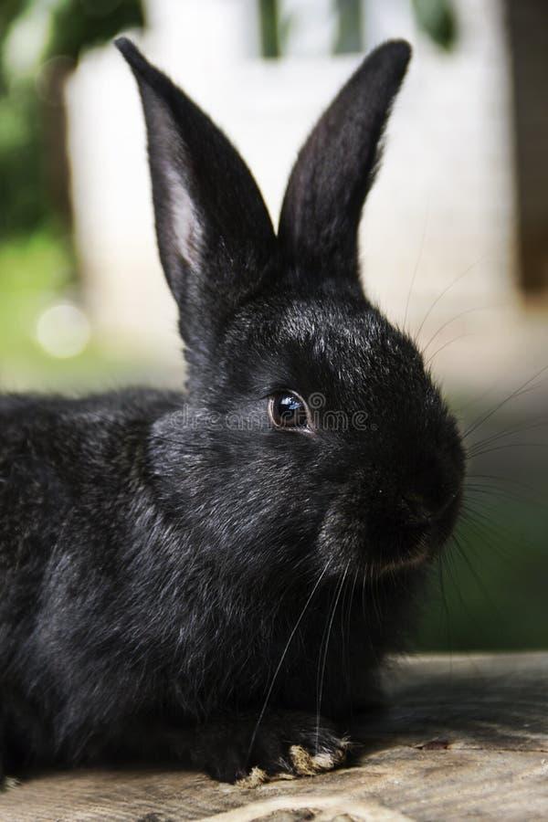 Kaninchenhaus auf dem Plan näher an der natürlichen Umwelt stockfotografie