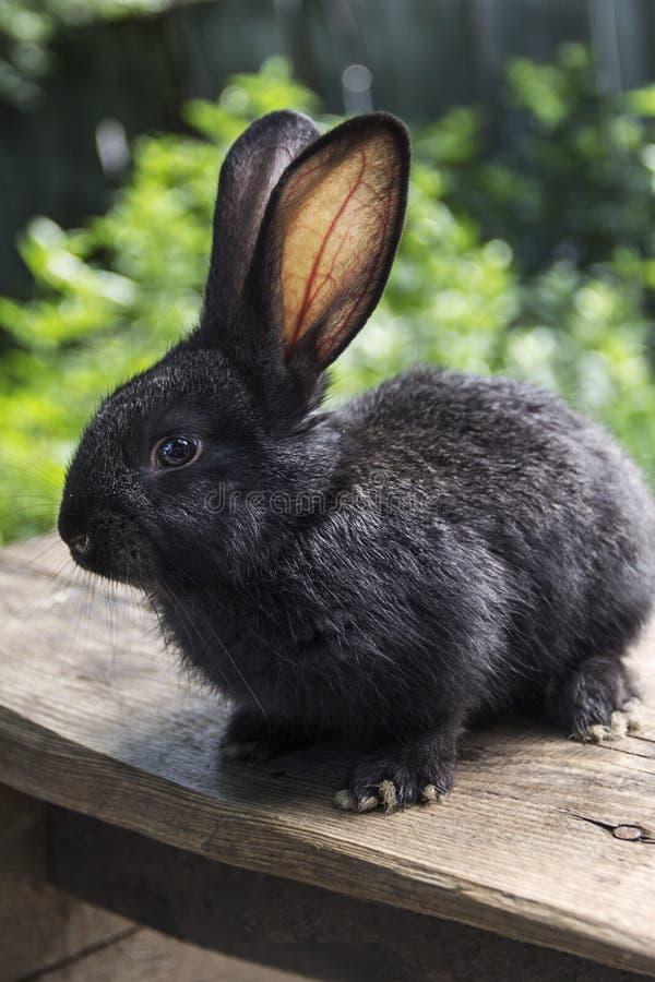 Kaninchenhaus auf dem Plan näher an der natürlichen Umwelt stockfoto