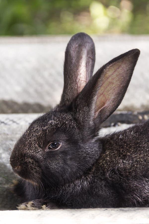 Kaninchenhaus auf dem Plan näher an der natürlichen Umwelt lizenzfreie stockbilder