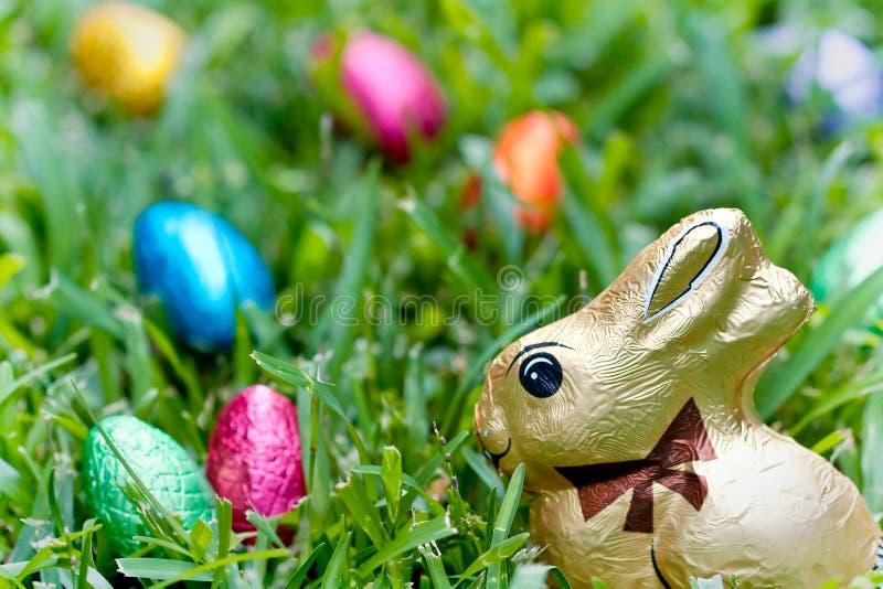 kaninchokladägg arkivfoto