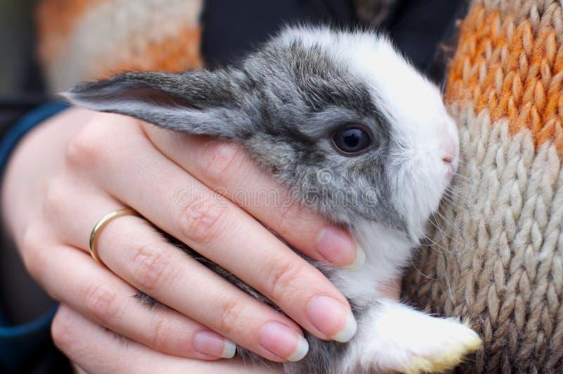 kaninen hands little fotografering för bildbyråer