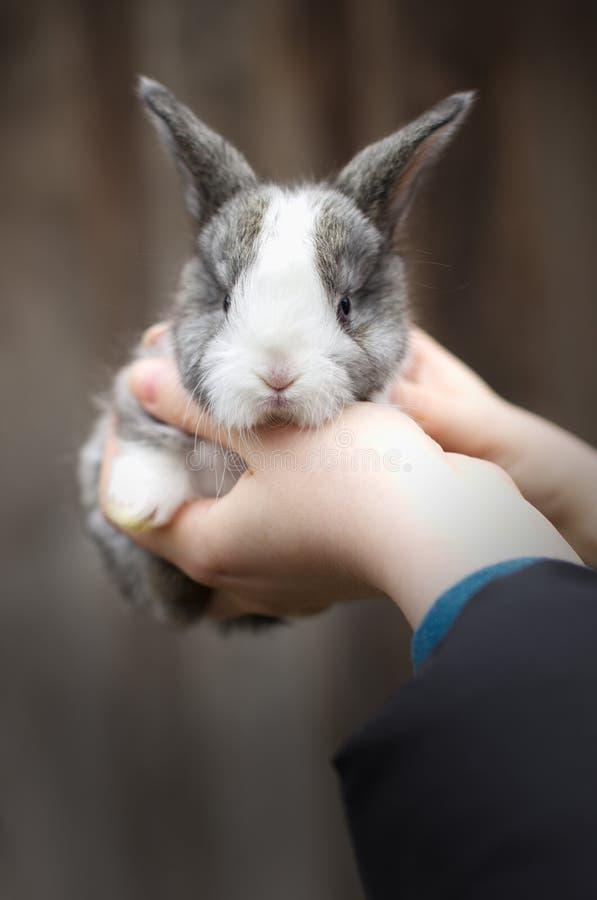 kaninen hands little royaltyfri foto