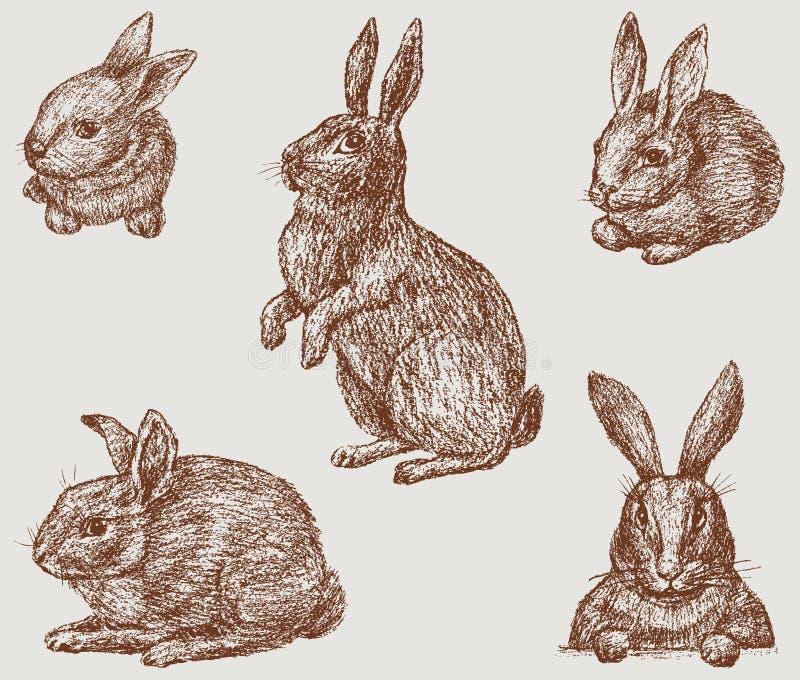 kaniner vektor illustrationer