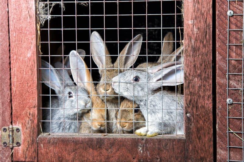 Kaniner i en hutch fotografering för bildbyråer