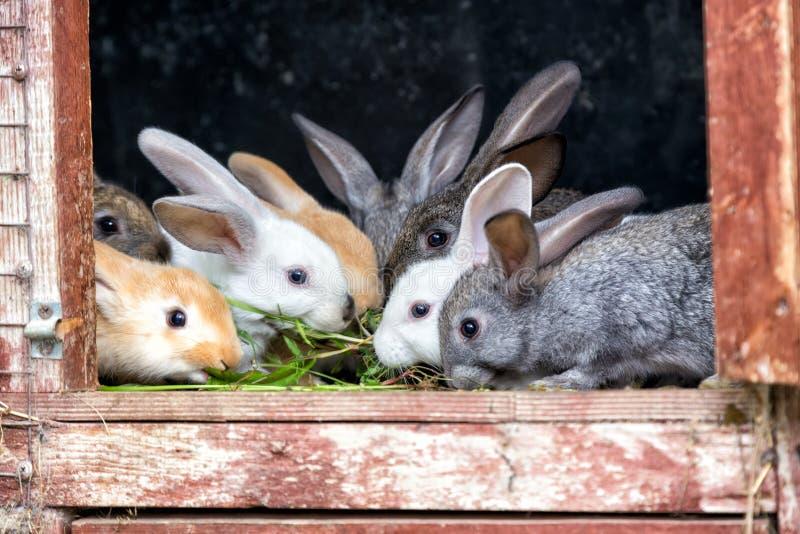 Kaniner i en hutch arkivfoto