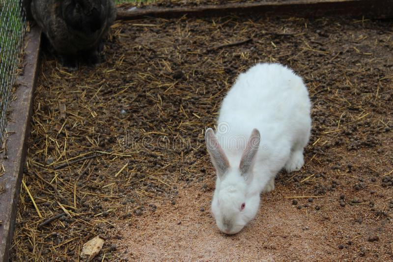 Kaniner i parkerar, djur royaltyfri bild