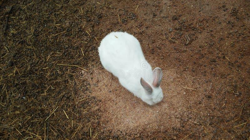 Kaniner i parkerar, djur royaltyfria foton