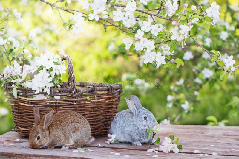 kaniner i vårfruktträdgård arkivfoto