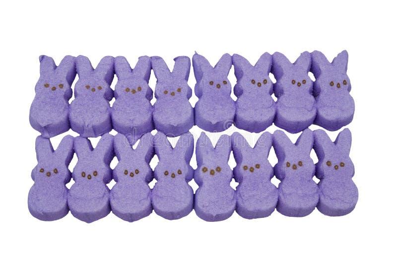 kaningodiseaster purple arkivfoton