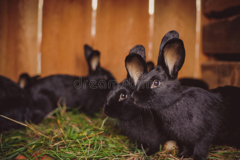 Kaninlantgårddjur i lantgården arkivfoto