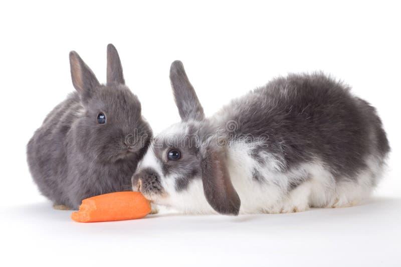 Kaninmoroten isolerade två
