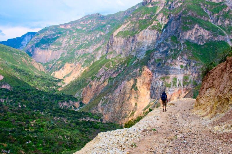 Kanjon Colca, Peru arkivbild