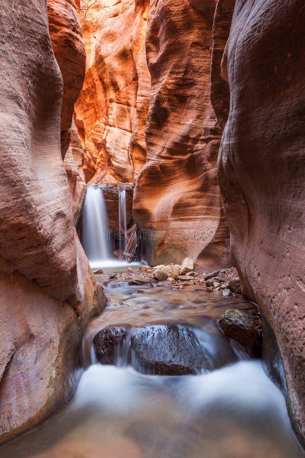 Kanjon för Kanarra liten vikspringa i den Zion nationalparken, Utah royaltyfria bilder