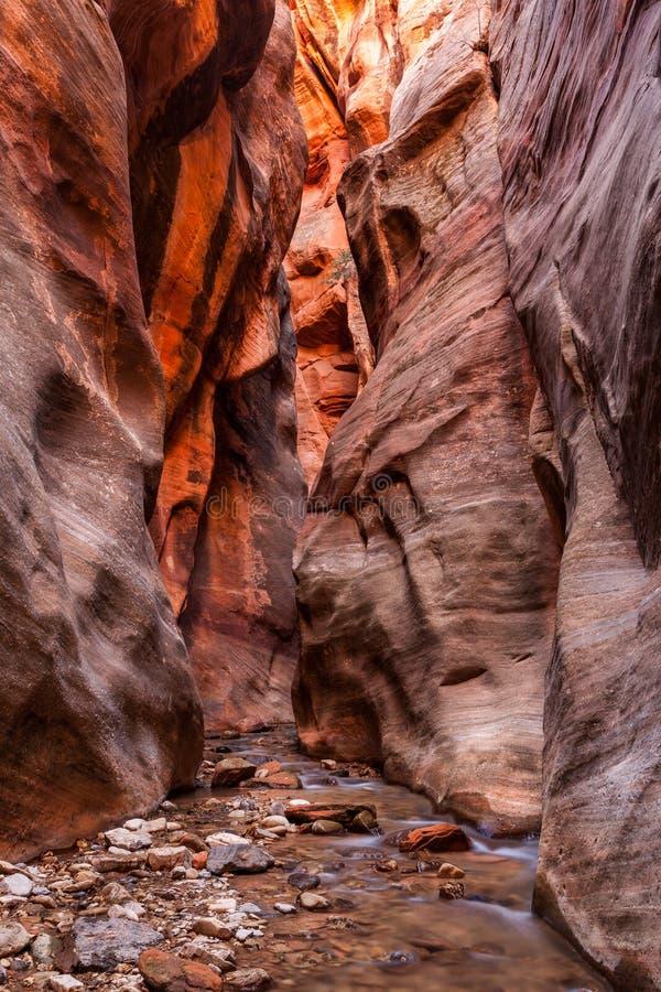 Kanjon för Kanarra liten vikspringa i den Zion nationalparken, Utah arkivfoto