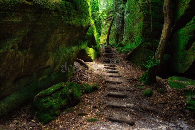 Kanjonslinga på den Dismals kanjonen royaltyfri fotografi